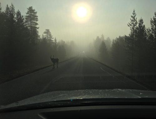 ProMinentin Anjan viikko Pohjois-Suomessa
